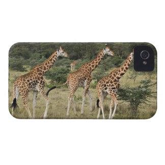 Trio of Rothschild s Giraffes Lake Nakuru Case-Mate Blackberry Case