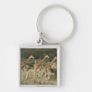 Trio of Rothschild's Giraffes, Lake Nakuru Keychain