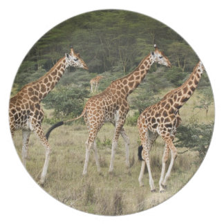 Trio of Rothschild's Giraffes, Lake Nakuru Plates