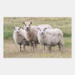 Trio of Sheep in Iceland Rectangular Sticker