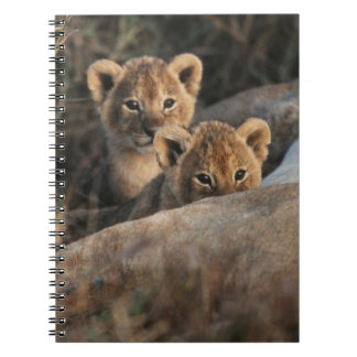 Trio of six week old Lion cubs sitting Spiral Notebook