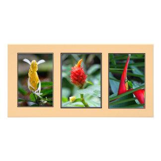 Trio of Tropical Flowers Photo Card