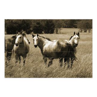 Trio Art Photo