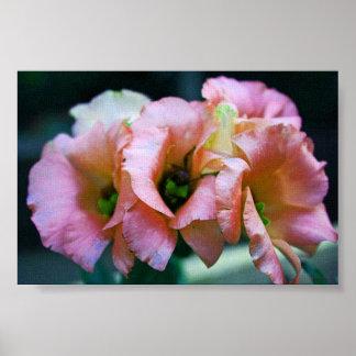 Tríos rosados impresiones