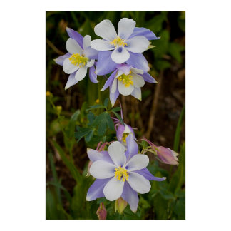 Tríos y nueva floración poster
