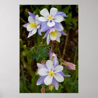 Tríos y nueva floración impresiones