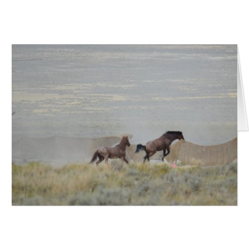 Triple B round up Horses Escape August 2011 Greeting Cards