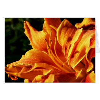 Triple-Flowered Day Lily Card