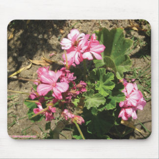 triple pink flower mouse pad