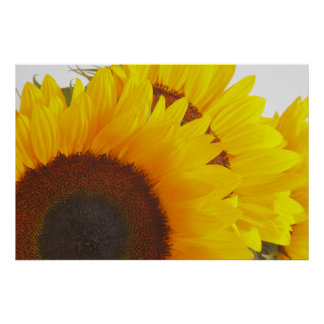 Triple Sunflower Posters
