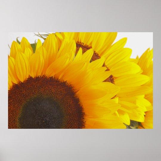 Triple Sunflower Poster