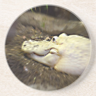 trippy white alligator zoomed reptile beverage coasters
