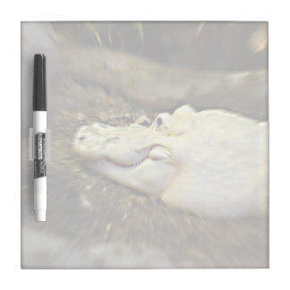trippy white alligator zoomed reptile dry erase board