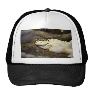 trippy white alligator zoomed reptile mesh hat