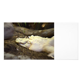 trippy white alligator zoomed reptile photo card