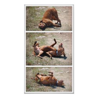 Tríptico torpe feliz del perro de la mezcla del fotografía