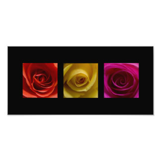 Triptych Roses orange yellow pink Panoramic Photo Print