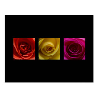 Triptych Roses orange yellow pink Post Cards