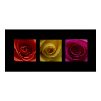 Triptych Roses orange yellow pink Poster