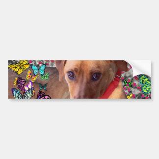 Trista the Rescue Dog in Butterflies Car Bumper Sticker