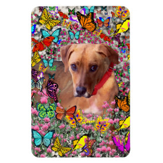 Trista the Rescue Dog in Butterflies Magnet