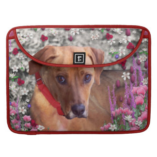 Trista the Rescue Dog in Flowers Sleeves For MacBooks