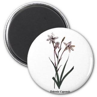 Tritonia Capensis 2 Inch Round Magnet