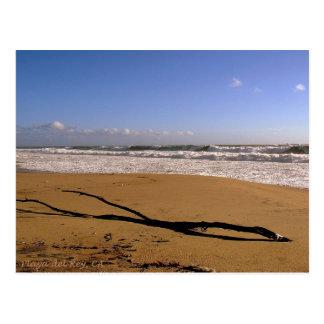 Trituradores de Playa del Rey - Mike Izzo Tarjetas Postales