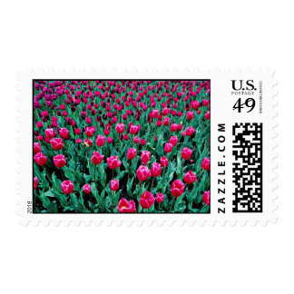 Triumph tulips flowers postage