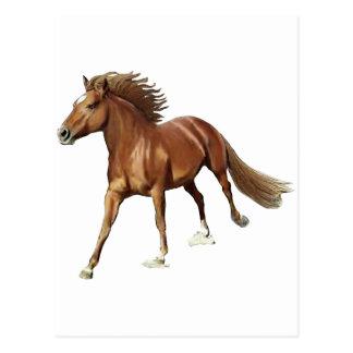 Triumphant Horse Postcard