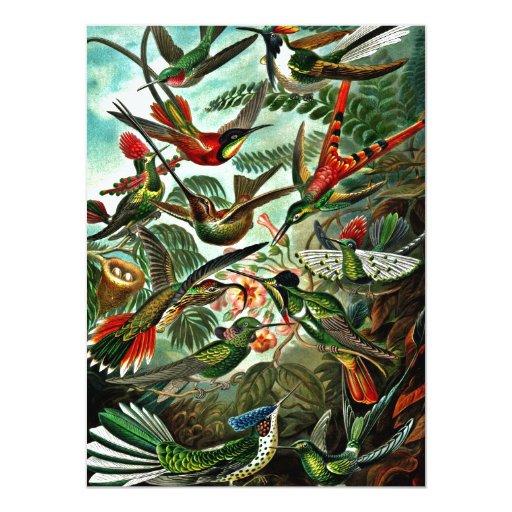 """Trochilidae - colibríes invitación 5.5"""" x 7.5"""""""