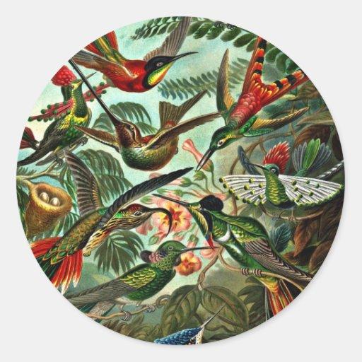 Trochilidae - colibríes pegatinas redondas