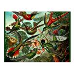 Trochilidae - colibríes postales