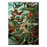 Trochilidae - Hummingbirds Card