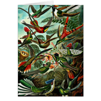 Trochilidae - Hummingbirds Card