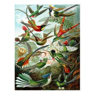 Trochilidae Hummingbirds, Ernst Haeckel Post Card