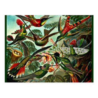 Trochilidae - Hummingbirds Postcard