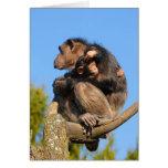 Trogloditas comunes de la cacerola del chimpancé d tarjetón