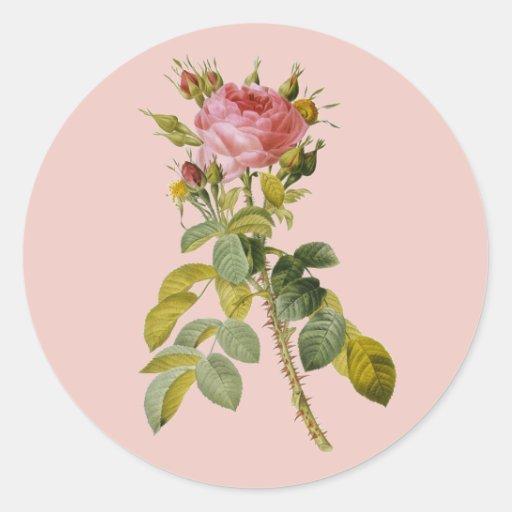 Tronco color de rosa inglés de Redoute solo Pegatina Redonda