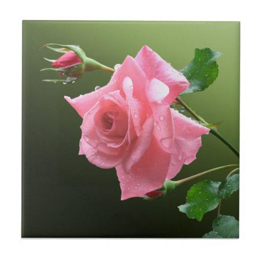 Tronco color de rosa rosado tejas  cerámicas