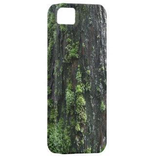Tronco cubierto de musgo iPhone 5 coberturas