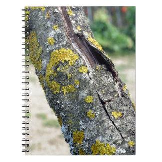 Tronco de árbol con el hongo amarillo del musgo libros de apuntes