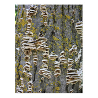 Tronco de árbol con el liquen tarjeta postal