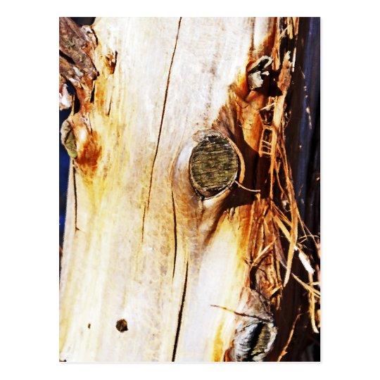 Tronco de árbol con los nudos tarjetas postales