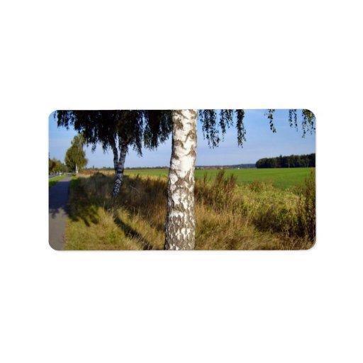 Tronco de árbol de abedul a lo largo del borde de  etiquetas de dirección