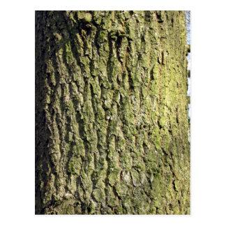 Tronco de árbol de madera del musgo tarjetas postales