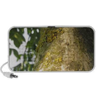 Tronco de árbol de nuez con el hongo amarillo del altavoces de viaje