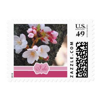 Tronco de árbol floreciente de Sakura de la flor Envio