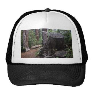 Tronco de árbol gorra
