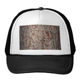 Tronco de árbol imperecedero gorra